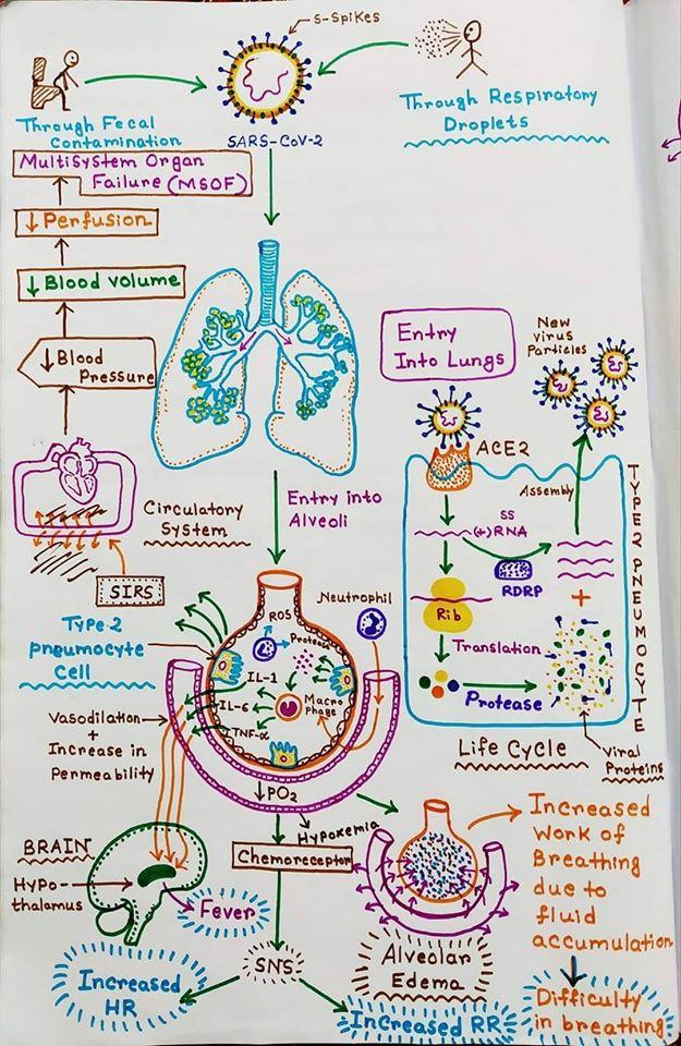 COVID-19 Pathophysiology